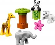 LEGO 10904 - LEGO DUPLO - Baby Animals